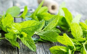 Read more about the article Guinea Pigs Can Eat Mint? ( Benefits, Health Hazards & More)