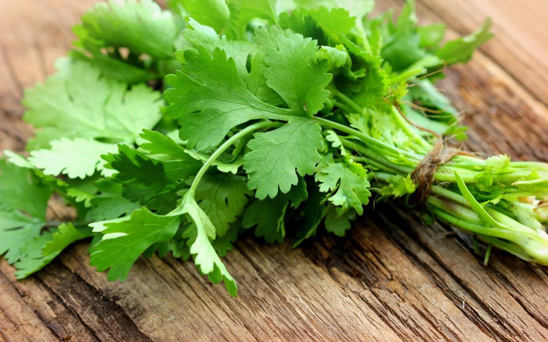 Read more about the article Can Guinea Pigs Eat Cilantro?