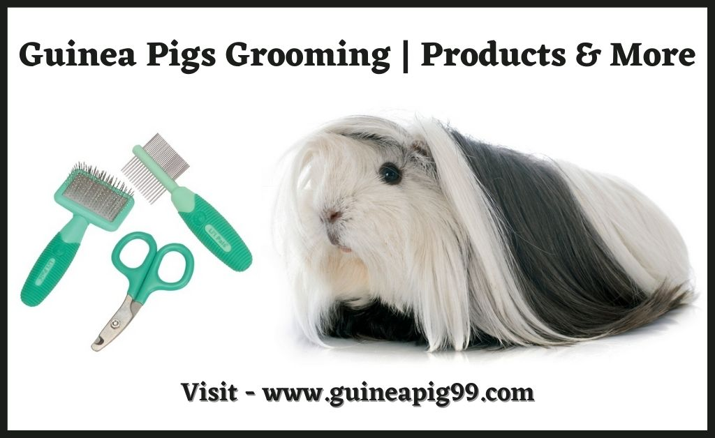 Read more about the article Guinea Pigs Grooming | Products & More