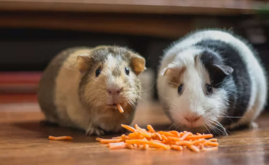 Read more about the article Guinea pigs favorite food | Yes and No's in food