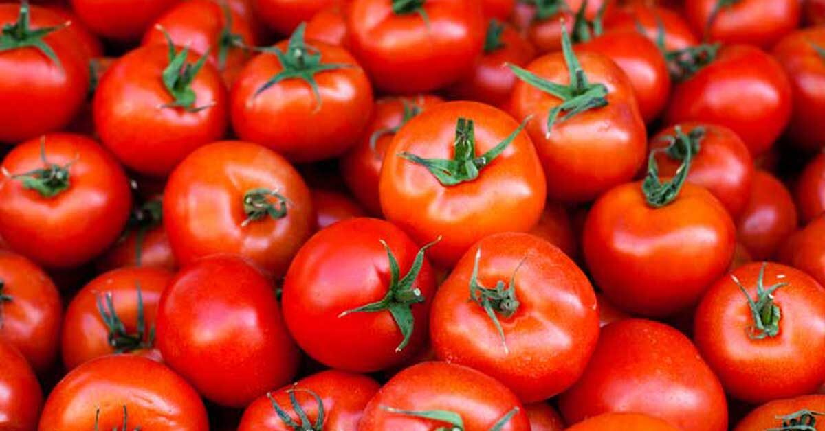 Read more about the article Can Guinea Pigs Eat Tomatoes?   Benefits, Risks, Serving Size & More